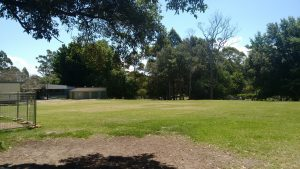 Killara Public School Grounds and Surrounding